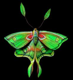 luna moth illustration | Kari von Wening's Portfolio: Moth and Insects