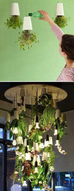 These hanging pots from Boskke have literally turned gardening upside down. I like the idea of growing herbs in the kitchen where they can be easily accessed for cooking!: Plant Chandelier, Plants Chandelier, Herbs Garden, Plants Upside, Cool Ideas, Plant