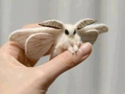 Venezuelan poodle moth. believe it or not, a real animal, not a hoax. The species was only recently identified, in 2009, but there are actually quite a few rather closely related moth species that look just as interesting/strange.