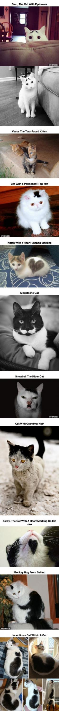 10 Cats That Got Famous For Their Awesome Fur Markings - Just DWL || The Ultimate Trolling: 10 Cats, Fur Markings, Kitty Kitty, Crazy Cat, Cat Lady, Awesome Fur, Animal