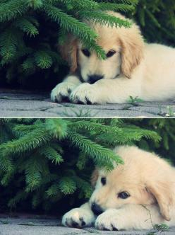Aww, just too sweet for words. via: Dumpdaddy Psalm 68:6 God causes the lonely to dwell in families. He leads prisoners into prosperity, - How precious!  :): Kitten, Animals, Cat, Sweet, Golden Retrievers, My Heart, Dog, Kitty