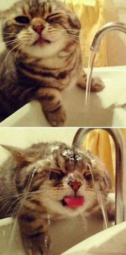 "cute kitty trying to drink water from the faucet! (^.^) Thanks, Pinterest Pinners, for stopping by, viewing, re-pinning, & following my boards. Have a beautiful day! ^..^ and ""Feel free to share on Pinterest ^..^ #catsandme #cats #doghealthcareblog"