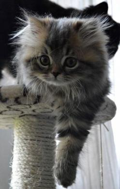 Try some of our tips for fixing cat behavior problems, so you can get back to the things you love...http://www.thecatniptimes.com: Cats, Fluffy Kitten, Cute Kitten, Baby Face, Adorable Kitten, Cutest Kitten, Kitty, Fluffy Cat