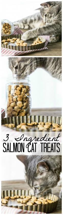 3 Ingredient Salmon Cat Treats!! These are SO easy and our cat loves them!! Mini fish cracker shape makes them extra fun!: Cat Treats Homemade, Salmon Cat Treats, Easy Cat Treat Recipes, Cat Love, Homemade Cat Treats Recipes, Easy Cat Treats, Cat Recipes