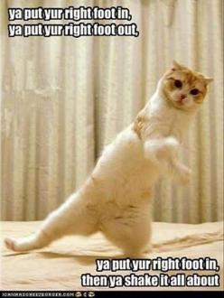 Attack Of The Funny Animals - 35 Pics: Funny Animals, Kitty Cat, Funny Cats, It S Zumba, Zumba Cat, Funny Picture, Funny Stuff, Zumba Fitness, Zumba Time