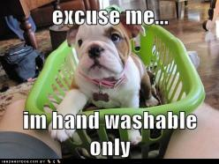 Bulldogs never get old...: Excuse Me, Adorable Animals, Animal Funnies, English Bulldogs, Funny Stuff, Cute Animals, Bull Dogs, Furry Friends