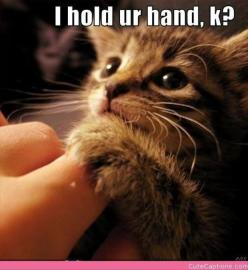 cutest kitten: Funny Animals, Kitty Cat, Adorable Animals, Crazy Cat, Hold Ur, Kitty Kitty, Cat Lady, Holding Hands, Ur Hand