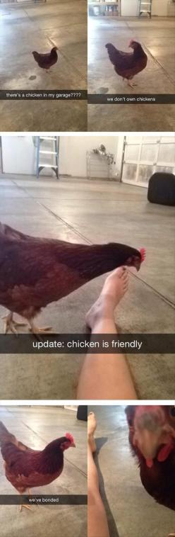 Dump A Day Funny Pictures Of The Day - 71 Pics: Giggle, Funny Things, Update Chicken, Funny Snapchat, Funny Picture, Funny Stuff, Random Chicken, Pet Chickens