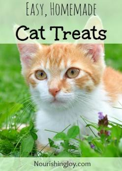 Easy, Natural, Homemade Cat Treats - Nourishing Joy: Kitty Cat, Cat Treats Homemade, Treats Recipe, Animal Face, Homemade Cat Treat, Diy Cat Treat, Cat Treat Recipe