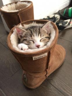 Even a kitten needs a Bearpaw boot to keep warm!: