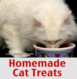Homemade Cat Treats Recipe. Calls for tuna packed in oil... are vegetable or olive oil good for cats? Are there oil alternatives?: Olive Oil, Diy Cat Treats Recipes, Dogs And Cats, Cat Treats Homemade, Cat And Dog Treats, Homemade Cat Treat, Christmas Dog