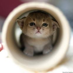 """miezekatzen:  kitten in a tube   "": Kitty Cats, Leave, Adorable Animals, Cute Animals, Kitty Kitty, Baby Animals, Dog, Cute Kittens, Socute"