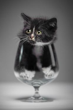Photographer Denis Lomme recently took this super cute photo of a little kitten sitting in a glass. Titled Have a Drink?, it was chosen as an Editor's Choice on 500px about a week ago. On the popular photo sharing site, the photo proved a bit controve