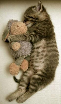 Precious!: Kitty Cat, Sweet, Cute Kitten, Cute Animals, Baby, Stuffed Animal, Kittycat, Cat Lady, Adorable Animal