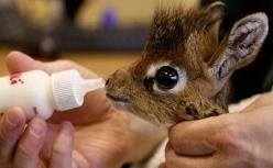 A baby giraffe...no idea where to pin this on my boards but just so stinkin' cute!!: Babies, Adorable Animals, Baby Giraffes, That One, Box, Baby Animals