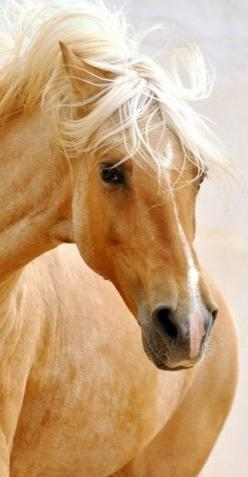As a girl playing 'horses' with my friends, I always had to be the Palomino.  Never took turns with the others because I was very blonde and apparently rather snooty about it.