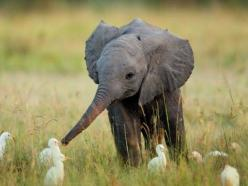 babies :) babies :) babies :): Babyelephants, Babies, Friends, Baby Elephants, Creature, Adorable, Baby Animals, Things, Photo