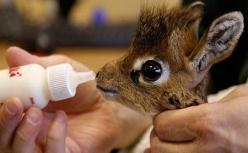 Baby giraffe OH. MY. GOSH.: Babies, Adorable Animals, Baby Giraffes, That One, Box, Baby Animals