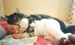 Beautiful Maine Coon cat and sleeping baby lying together spooning. :)