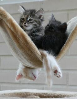 Cat hammock..the poor bottom cat