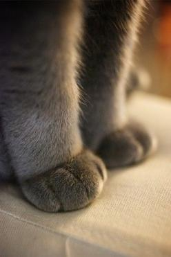 Cutest things in the whole world. I love cats paws. So litttle(: