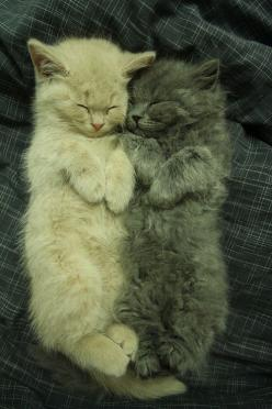 Friends snoozing together...