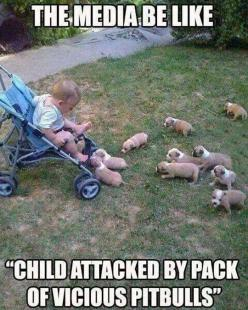 Funny jokes, Lmao quotes, funny pics …For the funniest pictures and jokes funny visit www.bestfunnyjokes4u.com: Puppies, Animals, Dogs, Puppys, Funny Stuff, Baby