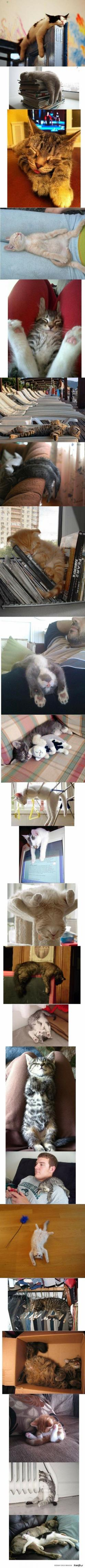 I don't know which one is more cute, the cat on the clothes rail or IN THE TROUSERS HANGERS!: Cats, Kitty Cat, Sleepy Cat, Sleepy Kitty, Crazy Cat, Cat Naps, Sleepy Kitties, Kittycat