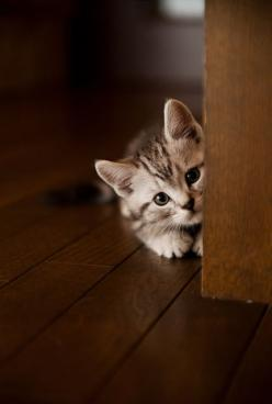 #KITTEN #SHARECUTE Tutte le dimensioni |Hide-and-Seek | Flickr – Condivisione di foto!: Kitty Cats, Pet, Peek A Boos, Kitty Kitty, Cat S, Chat, Cats Kittens, Cute Kittens