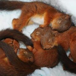Squirrel team napping champions of 1994