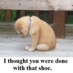 14 Hilarious Pet Pictures » All Pet News: My Life, My Heart, Thought, Poor Puppy, Dog, I Forgive You, So Sad, Poor Baby