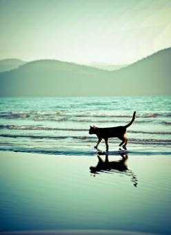 """""""At the beach, life is different.  Time doesn't move hour to hour, but mood to moment.  We live by the currents, plan by the tides and follow the sun."""" --Anonymous: Kitty Cats, At The Beach, Kitty Kitty, Cat S, On The Beach, Beach Kitty"""