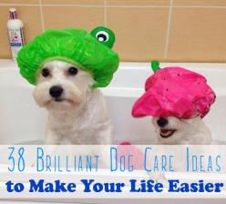 38 Brilliant Dog-Care Ideas To Make Your Life Easier: Care Ideas, Dog Owners, Shower Caps, 38 Brilliant, Dog Hack, Fur Babies, Dog S, Dog Care, Life Easier