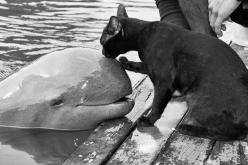 A black kitty starts a special friendship with an unusual friend from the ocean. A dolphin who comes onshore to meet the cat every time he comes to the waters.: Beluga Whale, Sweet, Adorable Animals, Animal Kingdom, Black Cats, Cute Animals, Animal Friend