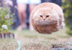 @Ashley Gee  running cat, taken just at the right time so he looks like a speeding bullet: Funny Kitty, Funny Fat Cat, Funny Cat, Awesome Cat, Funny Animal, Flying Cat, Fluffy Cat, Funny Smile
