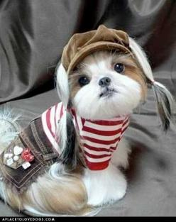 Awwww... Geez this pup is rockin' it: Doggie, Cute Puppies, Shihtzus, So Cute, Cute Animals, Puppy, Box, Shih Tzu S, Shih Tzus
