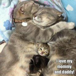 Beautiful Cat Family.: Kitty Cat, Sweet, Family, Family Love, Happy Family, Kitty Family, Cat Lady, Adorable Animal
