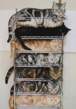 because no one likes a disorganized pile of kitties... The black is too funny: Cats Cats, Kitty Cat, Stacked Cat, Crazy Cat, Bunk Bed, Kitty Kitty, Cat Storage, Cat Lady, Cat Stack