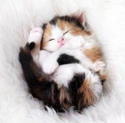 Calico Kitten: Kitty Cat, Cute Kitten, Kitty Kitty, Calico Cats, Kitty S, Cats Kittens