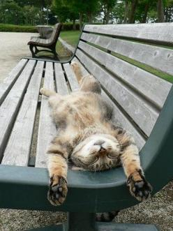 catching some rays...: Kitty Cats, Park Benches, Funny Cat, Lazy Cat, Cat Naps, Chat, Cat S, Funny Animal, Kittycat