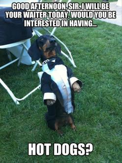 Dump A Day Attack Of The Funny Animals - 45 Pics: Waiter Dog, Funny Animals, Funny Dogs, Funny Picture, Dog Meme, Funny Stuff, Hot Dogs