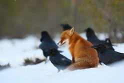 "ensphere:    ""Moment with ravens"" by Remo Savisaar 