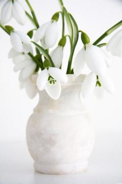 Galanthus (Snowdrop)    For such little flowers, they have an amazingly strong fragrance. It's a fragrance very similar to that of gardenias.: White Flowers, White Snowdrop, Country Farmhouse, Floral Arrangement, Color White