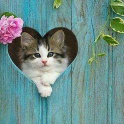 Have a ♡ photo: kitten peeking through a heart ...great inspiration for posing wiggly little creatures ...: Kitty Cats, Sweet, Heart Cat, Kitty Kitty, Kitty S, Cat S, Valentine, Cats Kittens