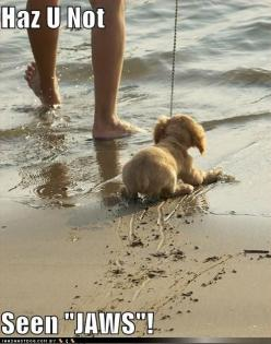 I have pictures of Ryder's first ocean experience and it's EXACTLY like this... he is forever terrified: So Cute, The Ocean, At The Beach, Funny Stuff, Poor Puppy, Funny Animal, Dog, So Funny, Poor Baby