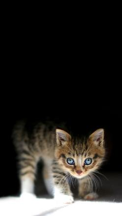 I wouldn't want to leave for work with a kitten this cute at home.: Kitty Cats, Beautiful Eyes, Blue Eyes, Kitty Kitty, Cat S, Cats Kittens, Cute Kittens, Cat Lady