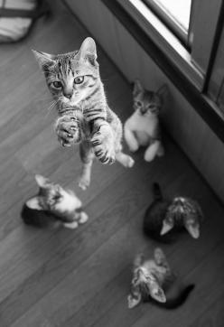 kitties!: Kitty Cats, Great Shots, Kitty Kitty, Crazy Cat, Cat S, Funny Animal, Kittycat, Cat Lady