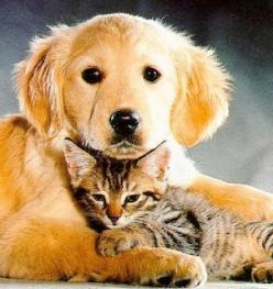 Let's volunteer to go play with the Cats and Dogs at the shelter! :)   Staying social with people keeps them happy and makes them better pets when they get adopted! Animals get lonely too!: Dogs And Cats, Cute Cats, Golden Retrievers, Friends Forever,
