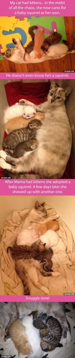 Mama Cat and her adopted squirrels... there are two now!: Cats, Baby Squirrels, Adopted Squirrels, Adopts Squirrels, Cat Adopts, Mama Cat, Kitty, Cat Lady