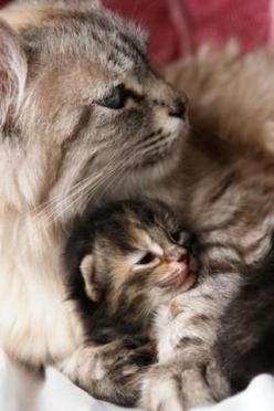 "Motherhood is wonderful for cats too! * * MOM CAT: "" Who said dat? Weez have more than one at once and if yer human doesn't haz you spayed; it's litter after litter. And I izn't talked 'trash' litter, but kittens ! "": Kitty Cat"